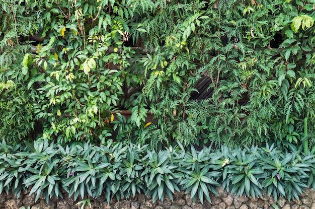Planta verde varias en pared de jardín