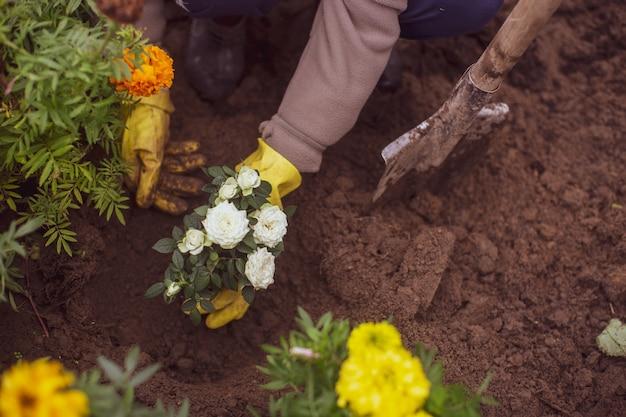 Plantación de flores por el agricultor en la cama del jardín de la casa de campo. concepto de trabajo de temporada de jardín