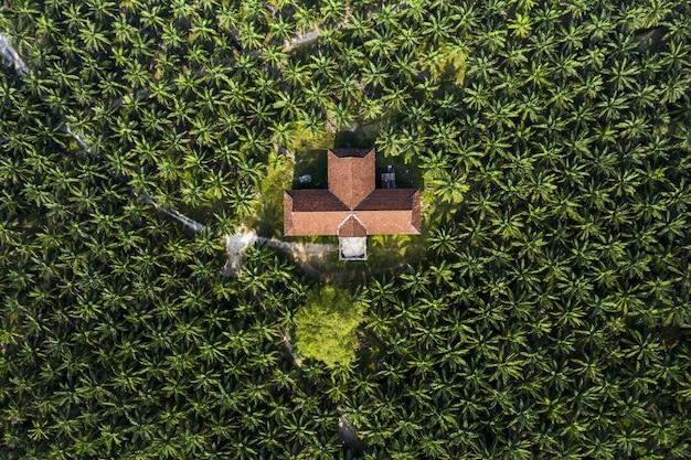 Plantación de palmeras con casa