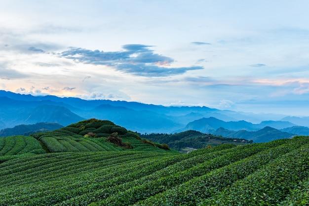 Plantación de té y naturaleza de montaña en taiwán