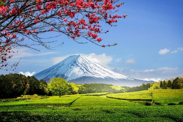 Plantación de té en la parte posterior que domina el monte fuji con cielo despejado en shizuoka, obuchi sasaba, japón