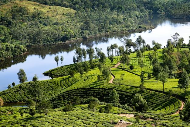 Plantaciones de lago y tee en kerala