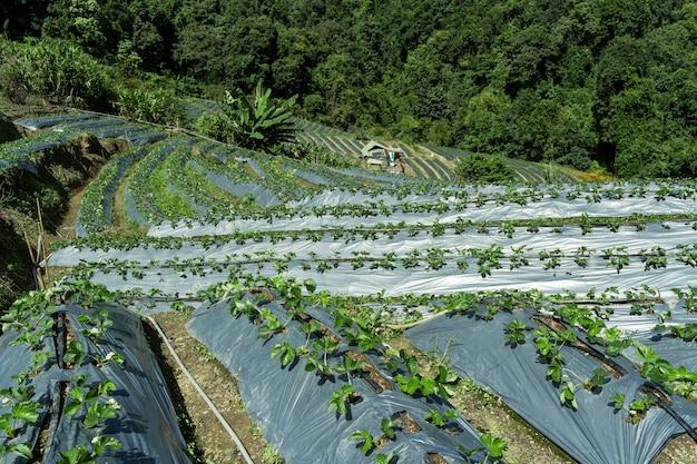 Plantaciones en terrazas en medio del bosque.