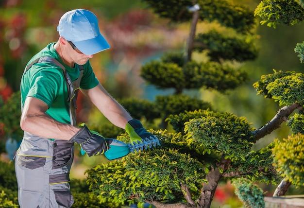 Plantadora de plantas de jardinero topiario