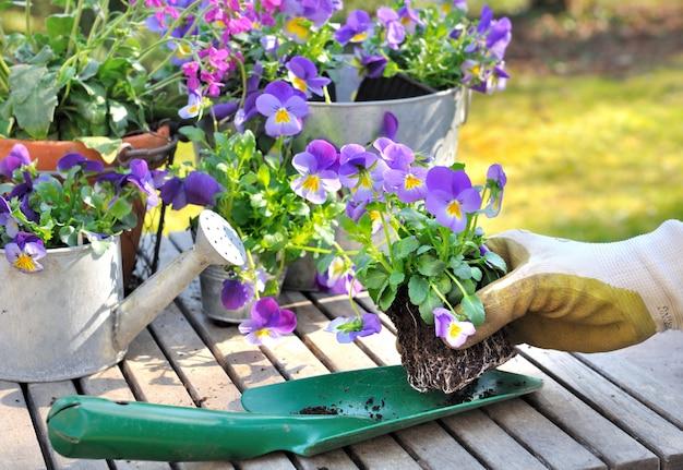 Plantando flores en el jardín