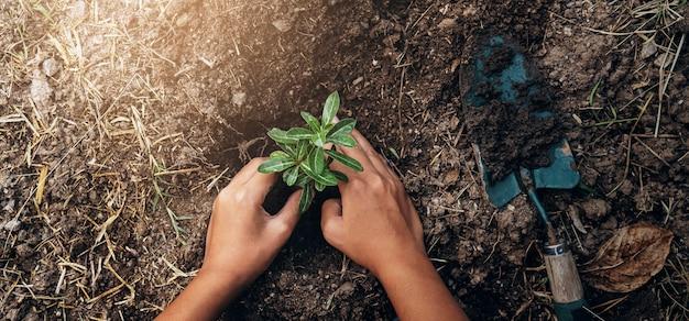 Plantar árboles en el jardín. concepto guardar mundo tierra verde