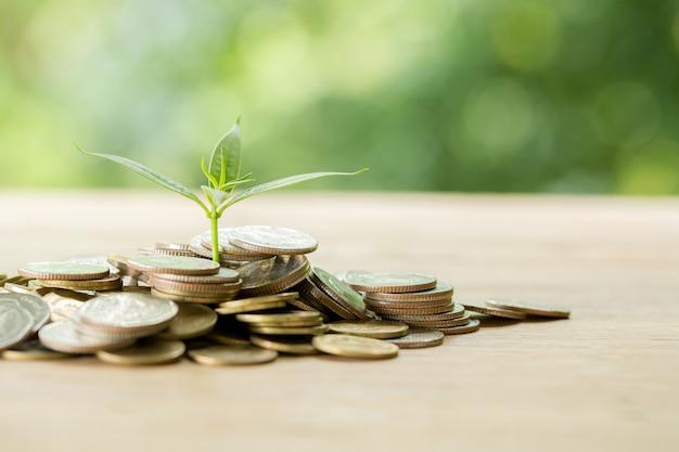 Plantar árboles en una pila de monedas con luz solar