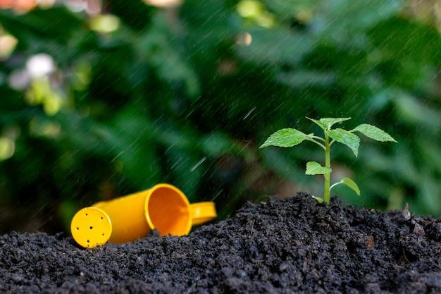 Plantar una pequeña planta en un montón de tierra bajo la lluvia