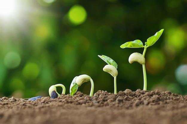 Plantar semillas crecen concepto de paso en jardín y luz solar. idea de agricultura