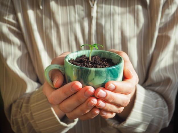 Plantar en una taza de café en manos de la mujer.