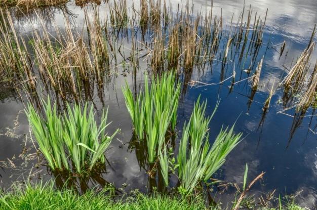 Plantas acuáticas verdes