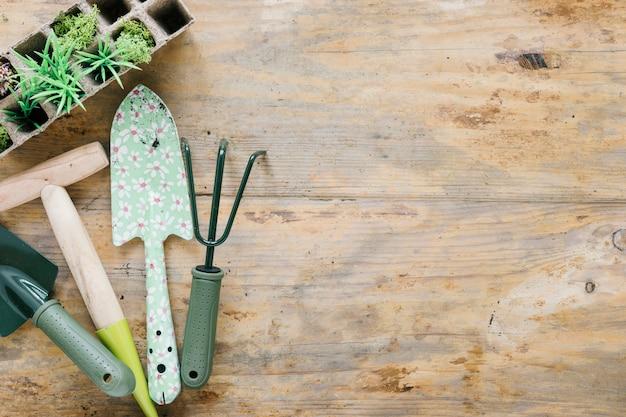 Plantas de bebé en bandeja de turba con herramientas de jardinería en escritorio de madera