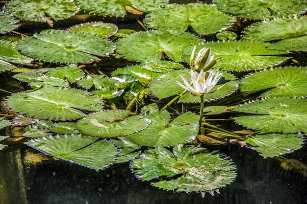 Plantas brasileñas al aire libre