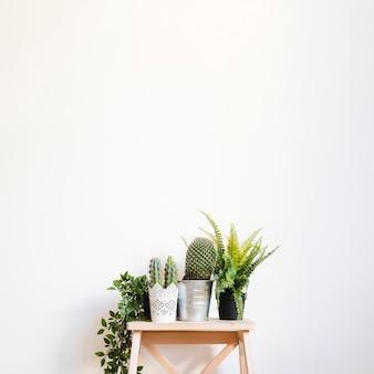 Plantas y cactus en taburete