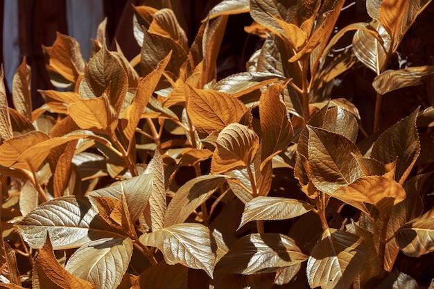 Plantas de color ocre en otoño iluminadas por la luz solar.