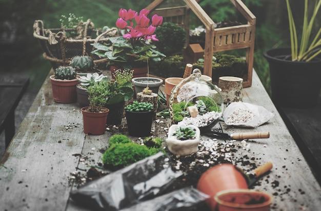 Plantas de jardín de terrario sobre la mesa
