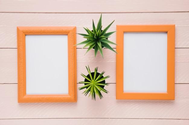 Plantas decorativas entre marcos minimalistas.