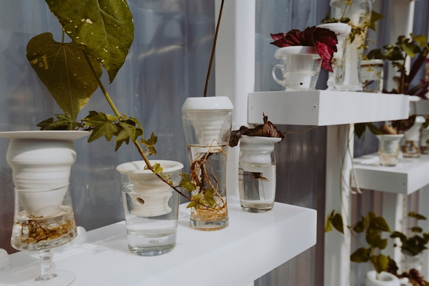Plantas en estantes blancos en un invernadero.