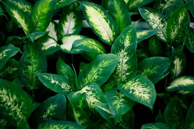 Plantas exóticas de moda, vista superior. plantas de interior, zona verde.