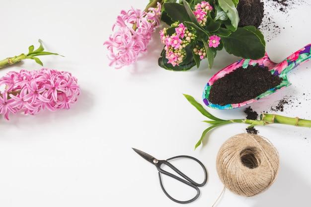 Plantas florales rosas y tijeras en blanco