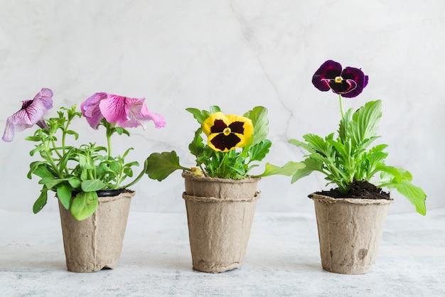 Plantas con flores en las macetas de turba contra el fondo gris