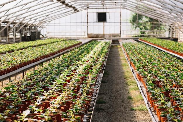 Plantas frescas creciendo en el invernadero
