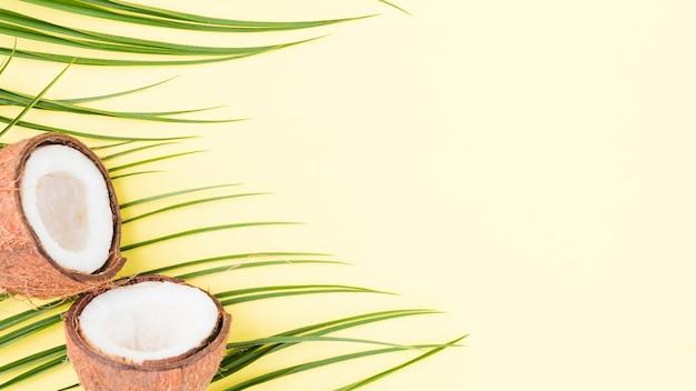 Plantas frescas de hojas verdes y coco.