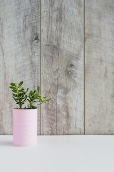 Plantas frescas verdes en el envase rosado en el escritorio blanco contra tablón de madera