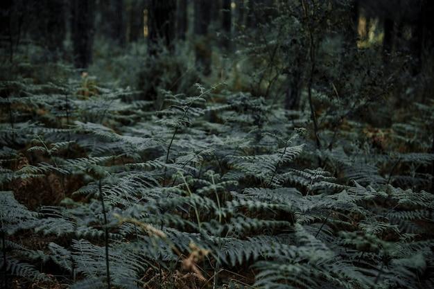 Plantas de helecho que crecen en el bosque tropical