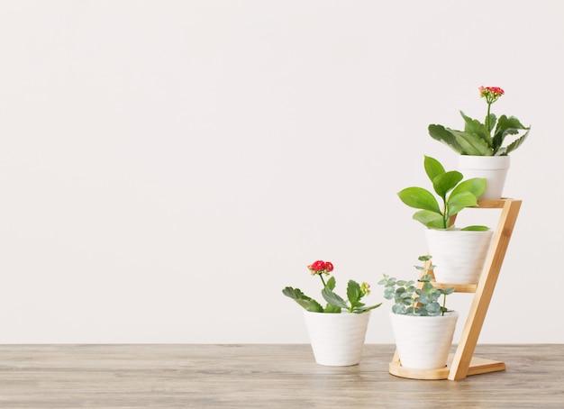 Plantas de interior contra la pared blanca en la mesa de madera