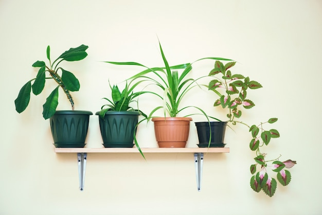 Las plantas de interior crecen en macetas en un estante fijado a una pared ligera.