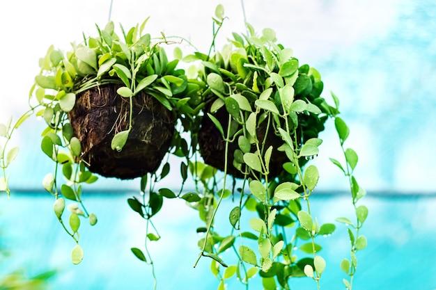 Plantas de interior en gotas de agua