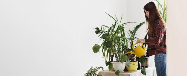 Plantas de interior de jardinería en casa. mujer joven, regar, hogar, plantas, en, habitación, en casa