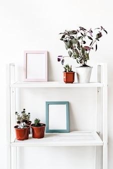 Plantas de interior en macetas en estante blanco en casa