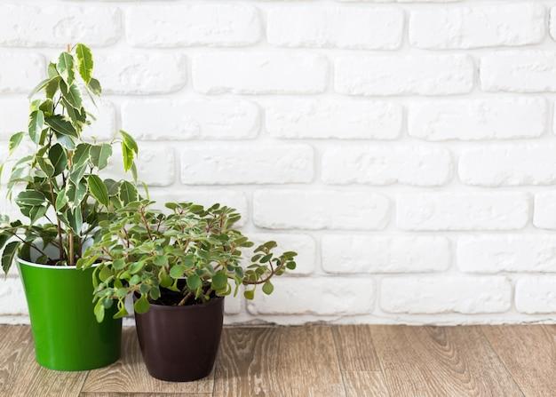 Plantas de interior en mesa de madera