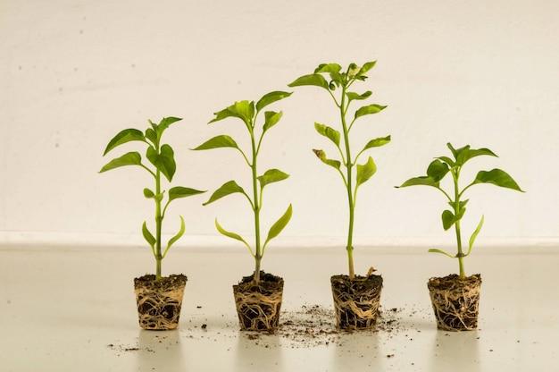 Plantas de interior que crecen una al lado de la otra en una habitación.