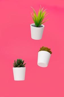 Plantas de interior, suculentas suspendidas en el aire sobre fondo de color