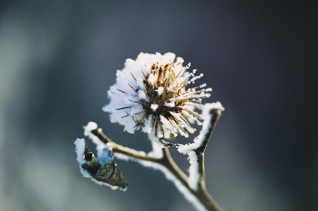 Plantas en invierno cubiertas de escarcha y nieve.
