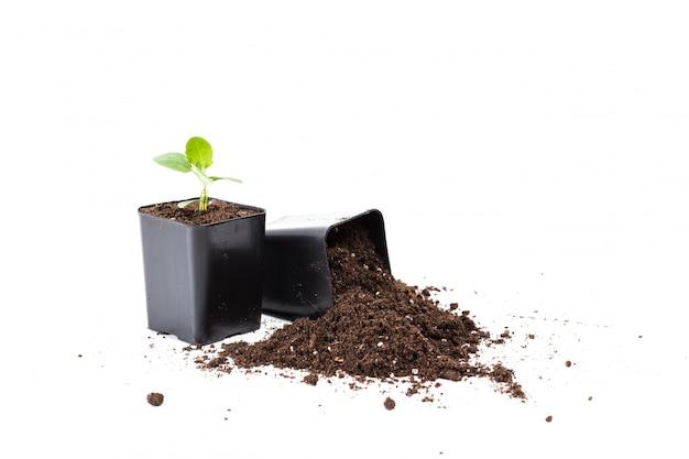 Plantas jóvenes con tierra en macetas negras