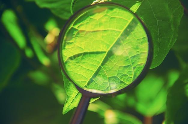 Plantas bajo la lupa. incrementar. enfoque selectivo