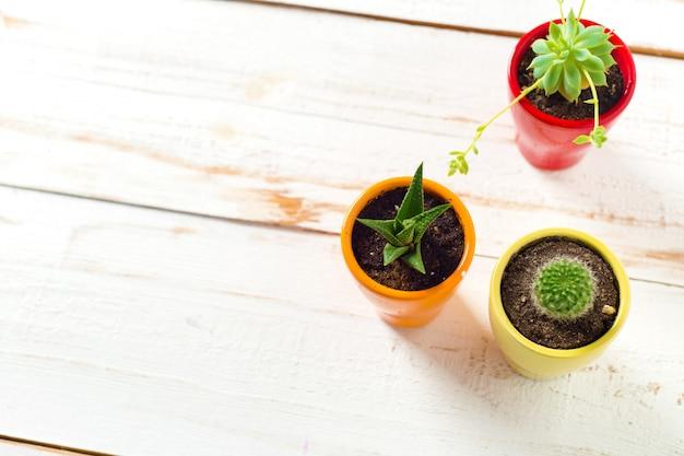 Plantas en maceta en madera blanca