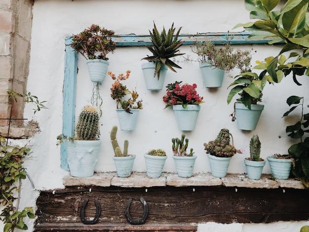 Plantas en macetas contra la pared blanca