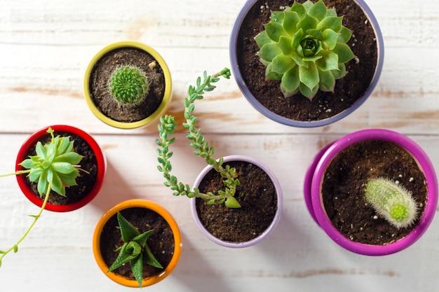 Plantas en macetas en madera blanca