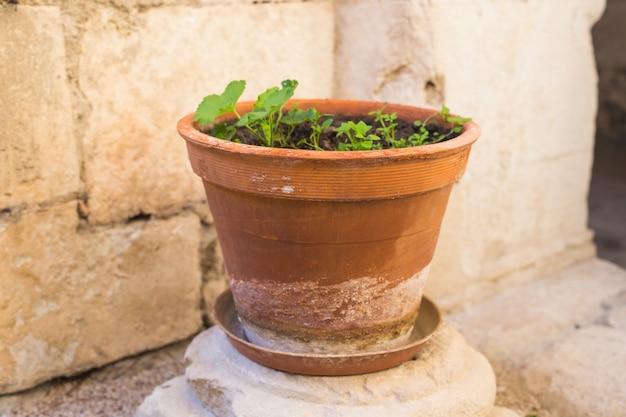 Plantas en macetas verdes en maceta hermosa al aire libre.