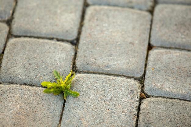 Plantas de malezas que crecen entre ladrillos de pavimento