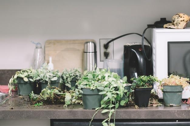 Plantas en la mesa de la cocina