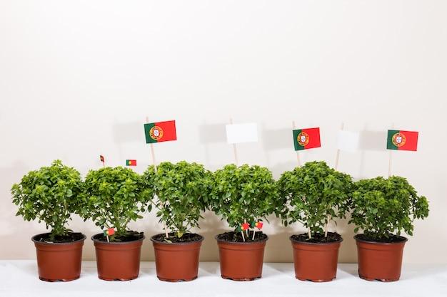 Plantas mínimas de ocimum