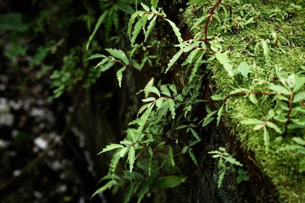 Plantas y musgo con fondo borroso