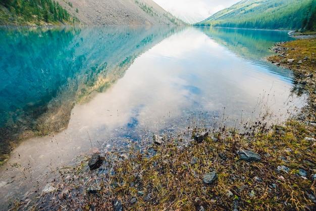 Plantas y piedras en el fondo y el borde del lago de montaña con primer plano de agua limpia. montañas gigantes reflejadas en la superficie del agua lisa. fondo con vegetación submarina. reflexión de la ladera de la montaña.
