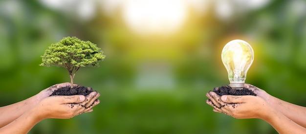 Plantas plantadas por manos humanas y bombillas en manos humanas para conservar energía